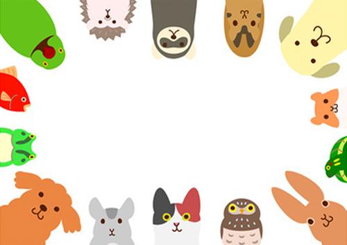 Cani, gatti e altri animali da compagnia